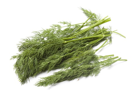 dill on white background  photo