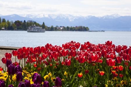 Bodensee s tulipány Reklamní fotografie