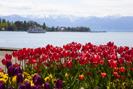 bodensee with tulips Stock Photo - 13925957