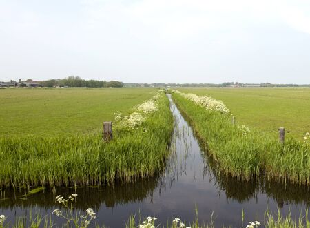 nederlandse grasland met greppel