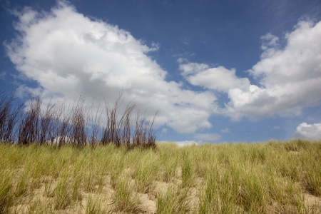 north holland: dutch dunes with blue sky