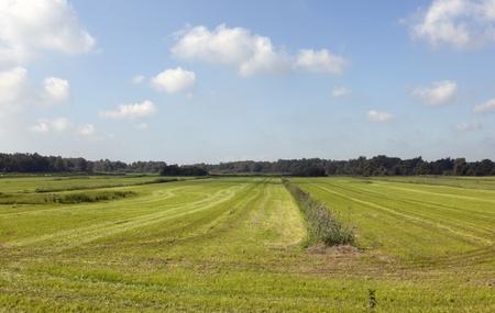 dutch farmland with blue sky