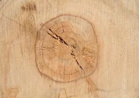 sawed: Photo of sawed wood texture with circles Stock Photo