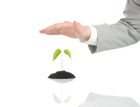 Businessman hand protecting green plant isolated on white Stock Photo - 2988313