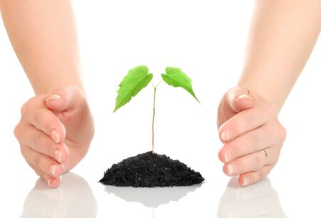 earth handful: Woman hands protecting small green plant isolated Stock Photo