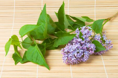 Lilac branch on bamboo background photo