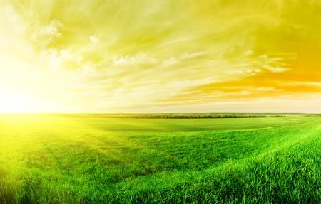 Zonsondergang in de zomer op het platteland