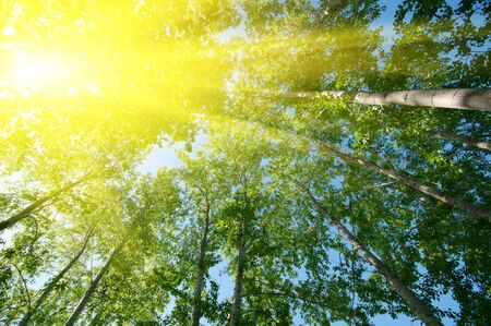 wooden beams: Sun over foliage in summer day