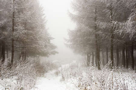 Foggy morning in the winter wood photo