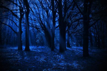 Nacht bos met maanlicht stralen Stockfoto