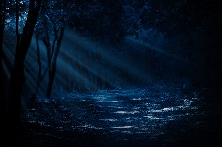 spooky: Night forest with moonlight rays