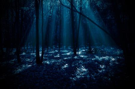 月光の光と夜の森 写真素材
