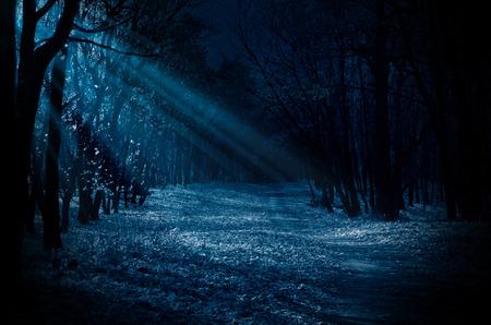 Nacht bos met maanlicht balken Stockfoto