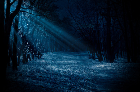spooky: Night forest with moonlight beams