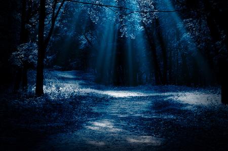 Forêt de nuit avec des poutres au clair de lune Banque d'images - 44743207