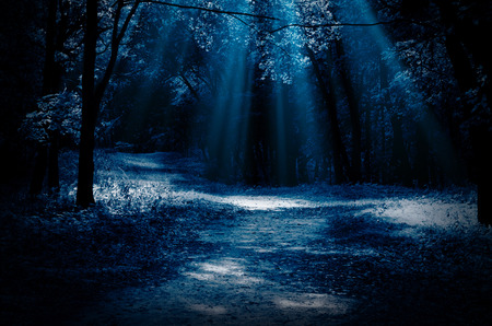 moonlight: Night forest with moonlight beams
