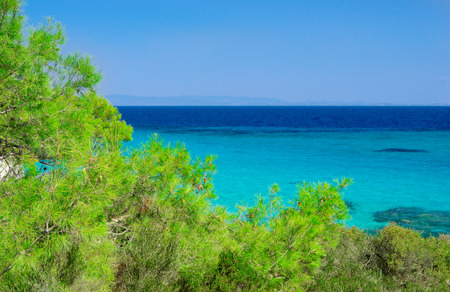 Sea coast with pines under blue sky Stock Photo