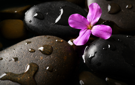 Wet pebbles with flower background wallpaper Stockfoto