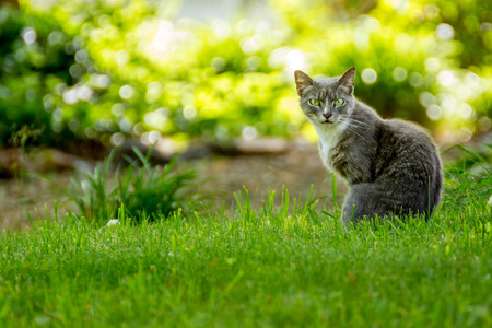 daunting: Green Eyed Cat Stock Photo
