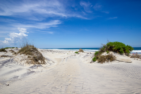 sand dunes: Sand Dunes on Coastline at Outer Banks Stock Photo