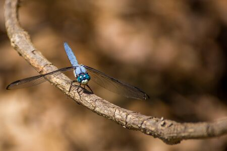 blue dragon: Blue Dragon Fly
