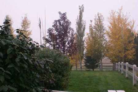 Trees and shrubs with their autumn colors in the morning fog Stock Photo - 3751303
