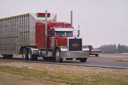 A big truck hauling a stock trailer known as a  bull rack photo