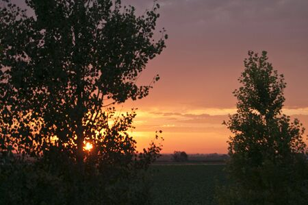 The setting sun diffused by trees Stock Photo - 4154061