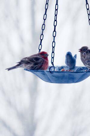 Wild birds sharing a meal at the bird feeder. Imagens