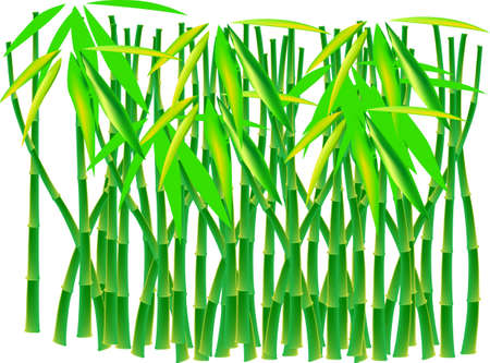 grass blades: A bamboo thicket against white background