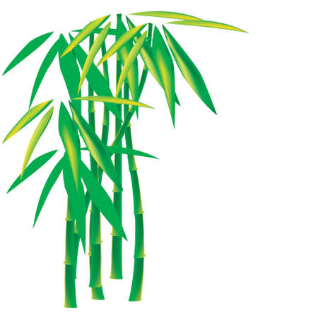 Bamboo on white background Stock Vector - 4834271