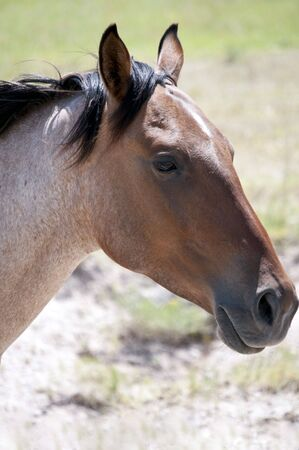 Roan horse filling the frame with a close-up head shot.