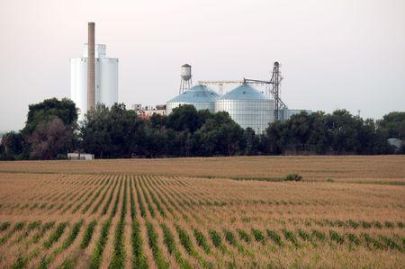cornrows: Mirando hacia abajo de hileras hacia los silos de grano en un pueblo rural de la granja de Colorado.  Foto de archivo