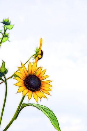 明るい黄色いヒマワリの写真からフラクタルを表示 写真素材