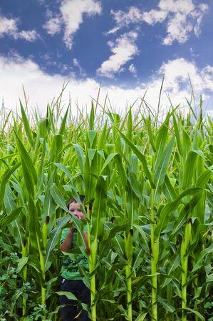 cornfield: Cute little boy hiding in a cornfield