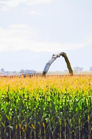 cornfield: Corn field nearly finished as a chopper harvest the last few rows