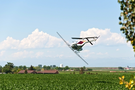 turn over: Helicopter crop duster making a turn over a cornfield ready to make another pass with pesticide.