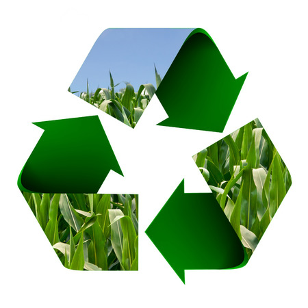 cornfield: Cornfield superimposed onto a recycle symbol isolated on white. Stock Photo