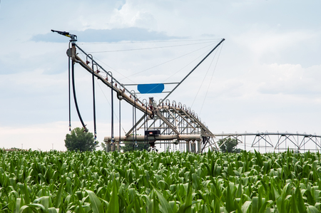 irrigated: Center pivot irrigation system sitting idle in a lush young corn field. North central Colorado, USA.