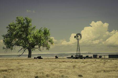 cottonwood  tree: Range cattle around a windmill water tank in northeastern Colorado, USA. Retro instagram look