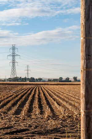 View of harvested cornfield and high tension power lines. Imagens - 133203462