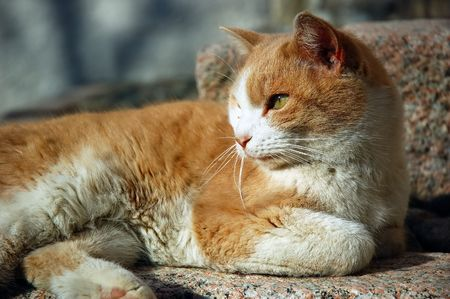 Orange street cat relaxing in winter afternoon light photo