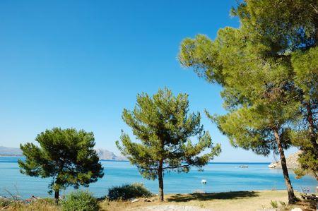 seacoast: Seashore view, pine trees in foreground, horizontal orientation