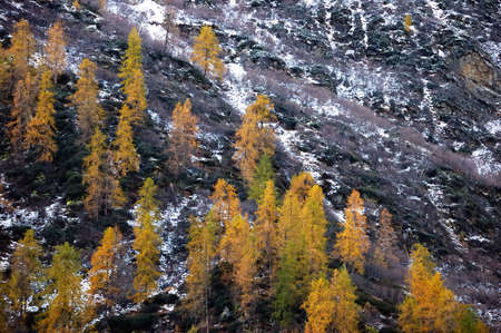 changing colors: Changing colors in the Alps during early Fall; Italy.