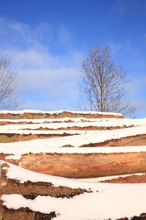 Stack of cut logs covered with snow photo