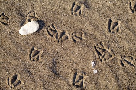 Bird foot print path on sand at the ocean Stock Photo - 2302486