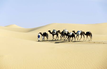 Camel caravan going through the sand dunes in the Sahara Desert, Algeria, Africa.