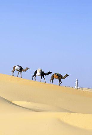 Camel caravan going through the sand dunes in the Sahara Desert, Algeria, Africa. Stock Photo - 2497912