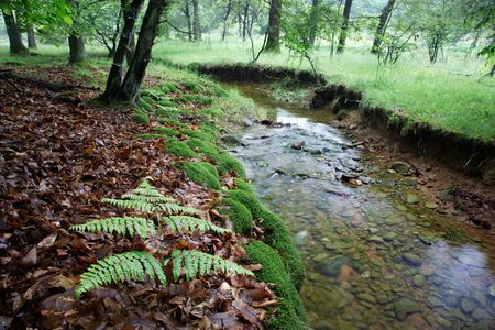 rivulet: A small stream in a european forest, springtime, Italy.