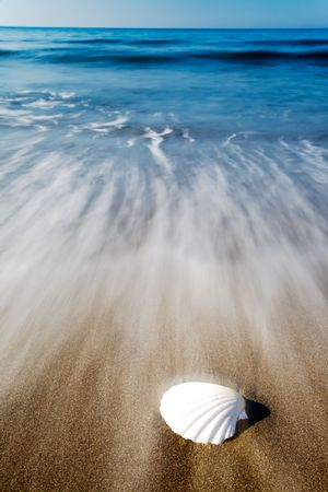 White seashell on a tropical beach, blur effect of coming wave.
